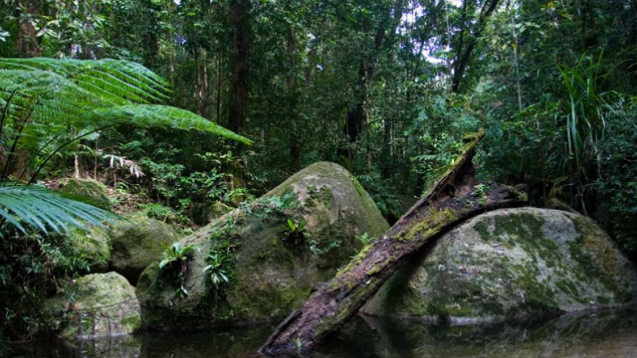 B ume und pflanzen im tropischen regenwald kindersache for Boden im regenwald